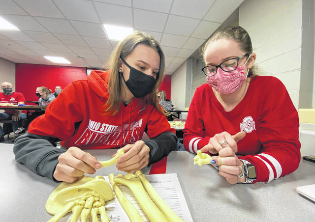 Julia Meyer and Kylie Alvarado examine the shape of bones during an advanced anatomy lab for OSU students held at Mercy Health on Thursday evening.