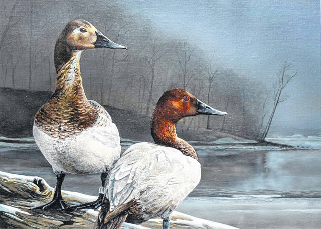 A pair of canvasback ducks painted by Ohio artist Sean Johnson of Louisville will appear on the 2022 Ohio Wetlands Habitat Stamp. Johnson won the competition March 19.