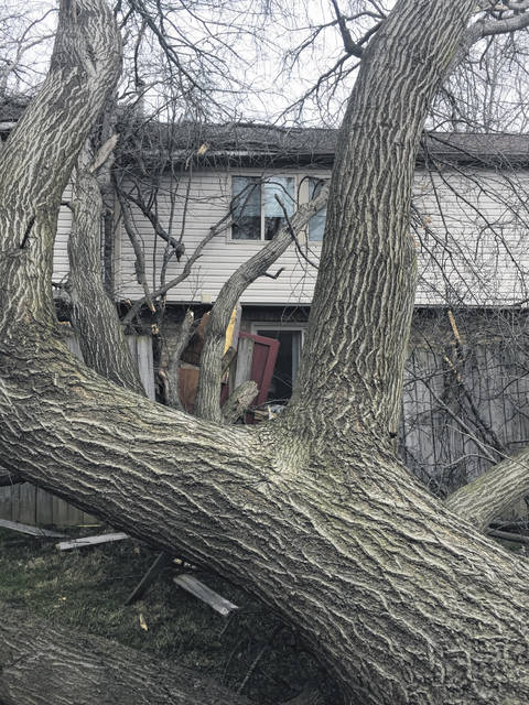 The overnight winds saw this 100-plus year-old tree crash on an apartment on Lima's north side.