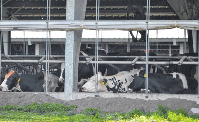 A plan to expand Continental Dairy, LLC will increase the capacity of the operation by 4,564 dairy cows.