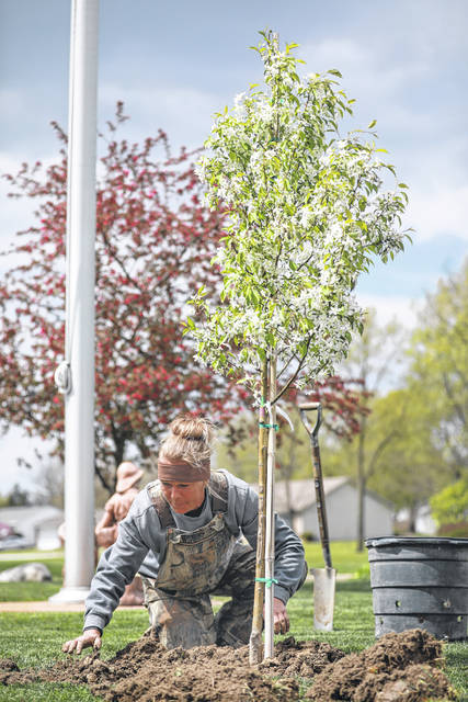 Shannon Grundisch of Spieles Nurseries plants a crab apple tree during an Earth Day celebration held at The Gardens of Wapakoneta on Thursday afternoon.