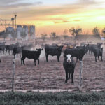 Is beef the new coal?