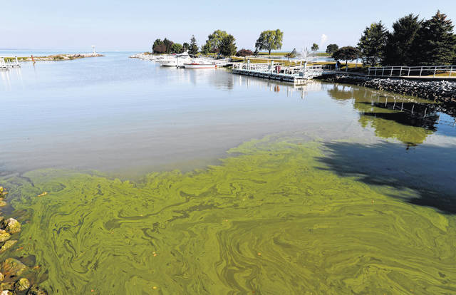 Algae floats in the water Sept. 15, 2017, at the Maumee Bay State Park marina in Lake Erie in Oregon, Ohio.