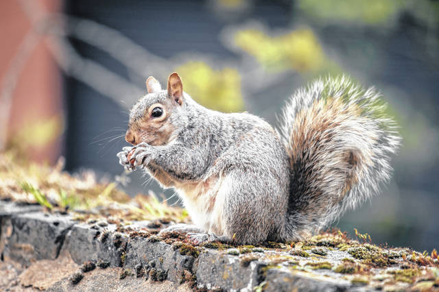 Squirrel mystery drops on late-night TV.