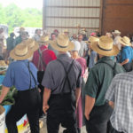 Auction revives small vegetable farms in Pennsylvania