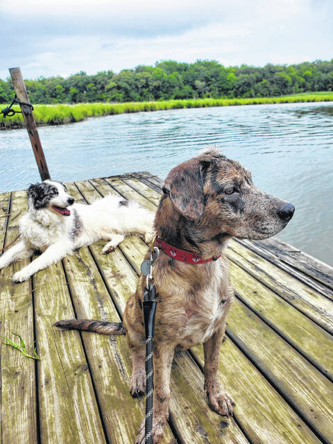 Dogs relax on a dock after a waterfront swimming adventure along southern Delaware's Culinary Coast.