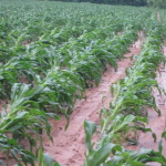 Storms lays waste to southeast Ohio crops