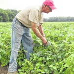 NEW – What if GMO seeds were banned?