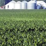 Drier conditions prevail on local farms as planting, field work continues