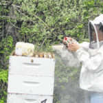 Beekeeping: CSU stresses pollination value
