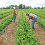 Farm couple take on new challenges