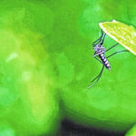 Plant chemical could check mosquitoes
