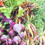 Plan now for your fall garden