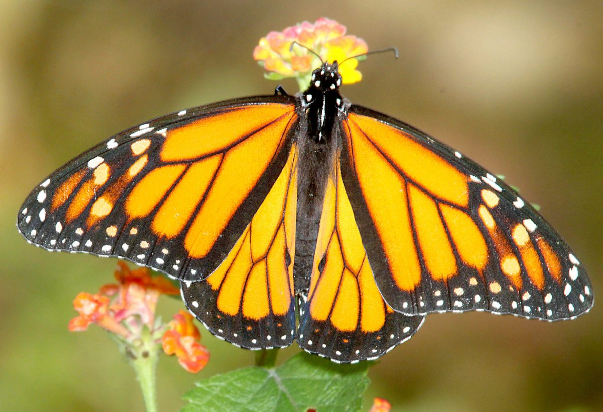 Signs Of Spring In Urban Wetland Little >> Spring In The Rio Grande Valley The Monitor